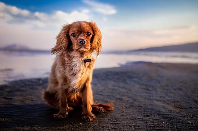 adorable, animal, beach