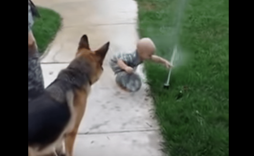 Baby gives dog a lesson