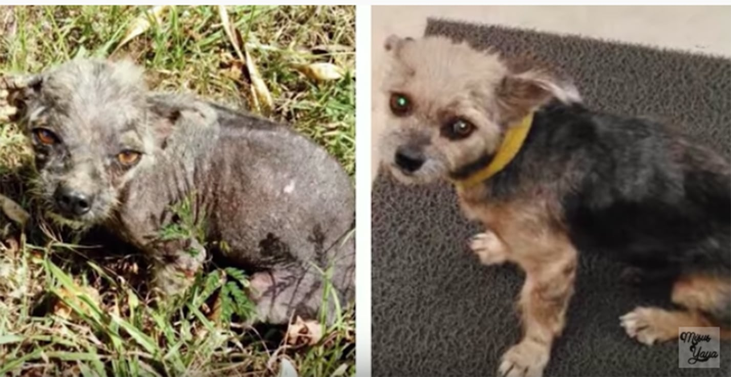 abandoned dog before and after