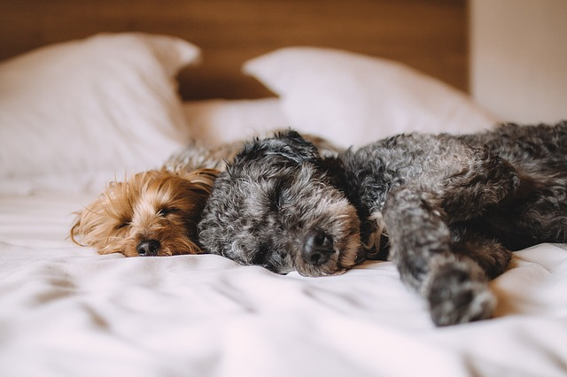 bed, dog, animals, puppy