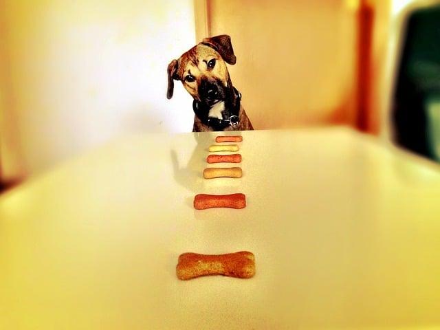 dog, bone, hunger