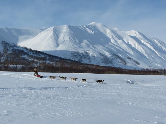 dog, laika, husky, mountains