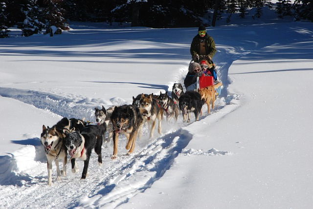 dog sled, continental divide, winter vacation