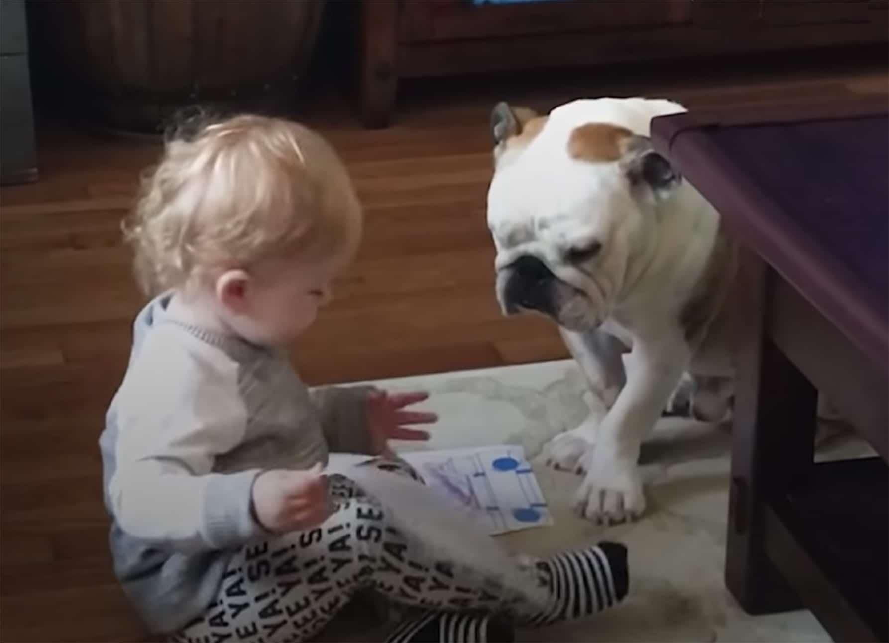 toddler with best buddy bulldog